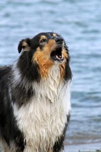 Controlling Dog Barking